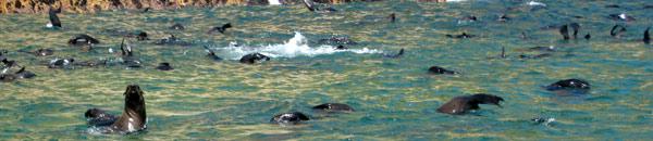 Seal-Sightings