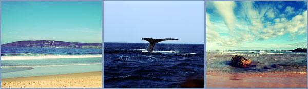whale-watching-plett