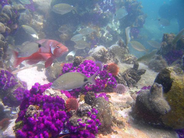 Photo: Pro Dive