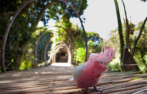 Birds-of-Eden
